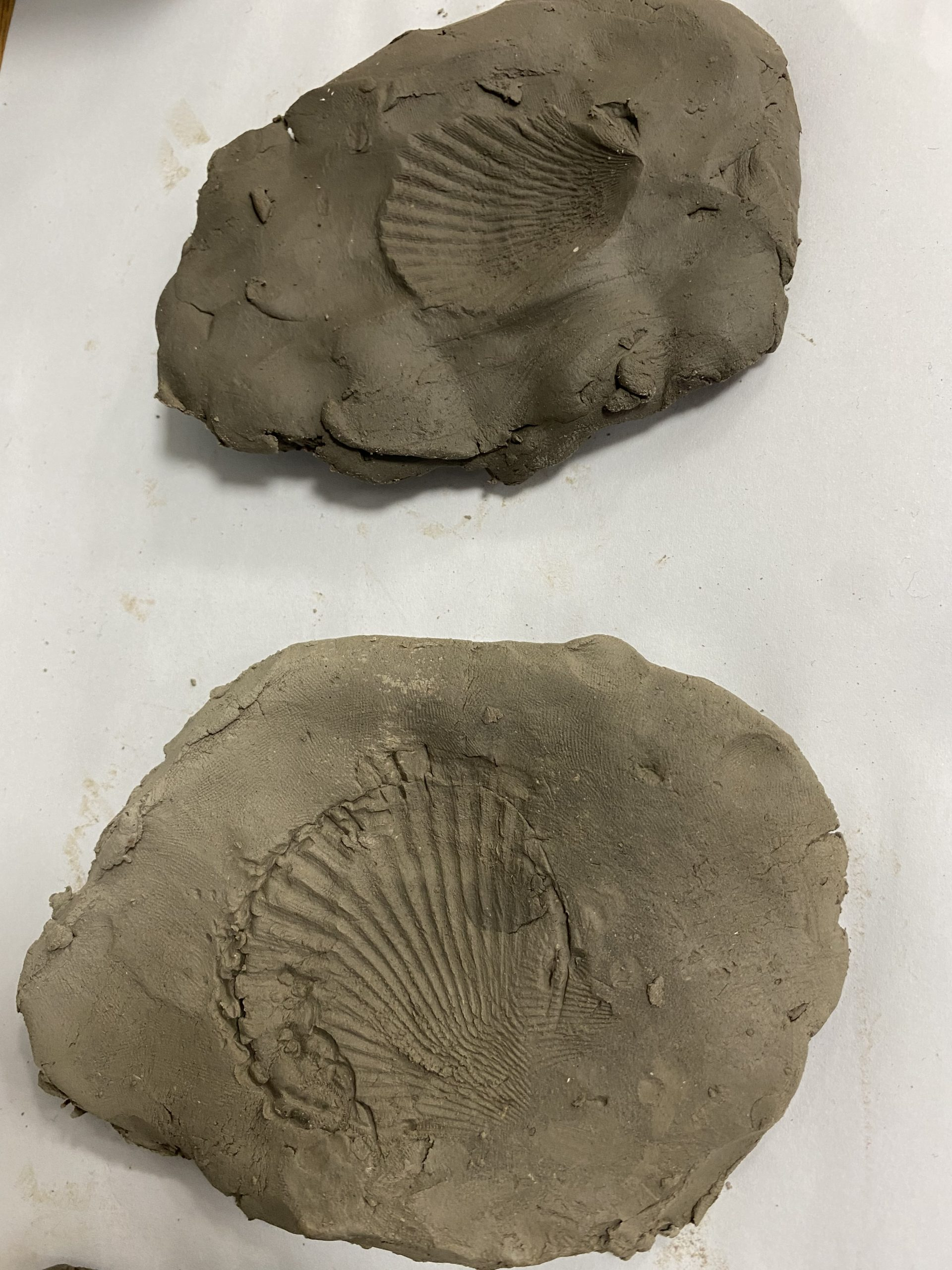 Y3 Class pages Making Fossils in clay